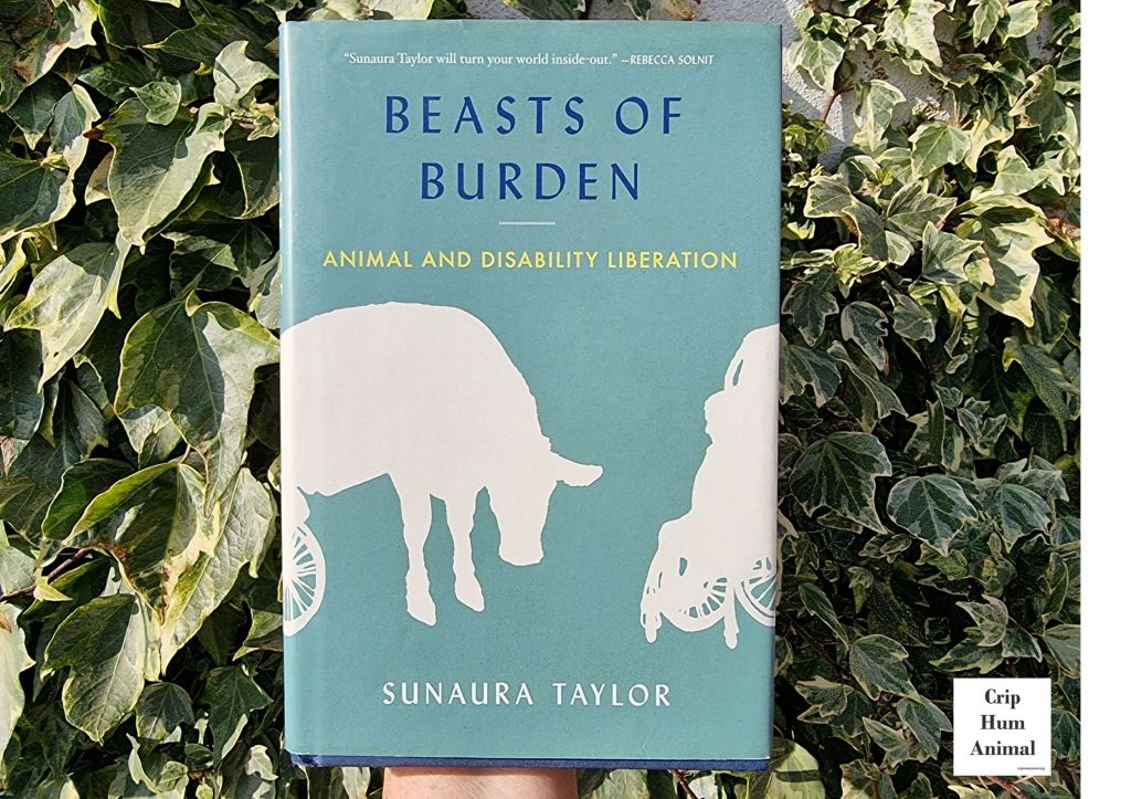 """Book with blue greenish cover with title and author on cover. Held up against background of green leaves/foliage. Top caption of book cover reads: """"Sunaura Taylor will turn your world inside-out – Rebecca Solnit"""". Bottom half of cover shows two silhouettes in white: on left a cow with hind legs supported by wheels, on right a person in wheelchair]"""